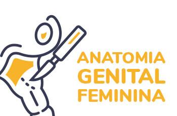 Imagem curso de Anatomia Genital Feminino
