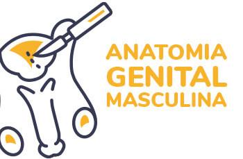 Imagem curso de Anatomia Genital Masculino